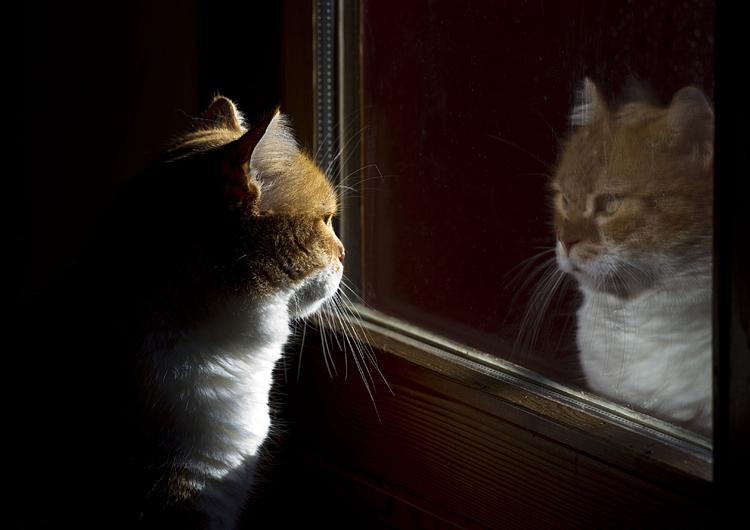 Riflessi la mezza via - Cane allo specchio ...